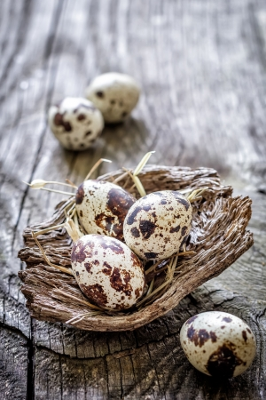 speckled wood: Quail eggs Stock Photo