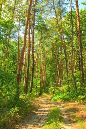 Forest road Stock Photo - 21283069