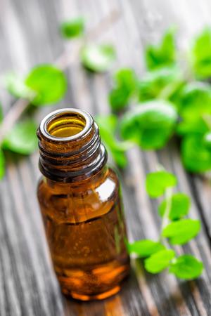 peppermint: Mint oil Stock Photo