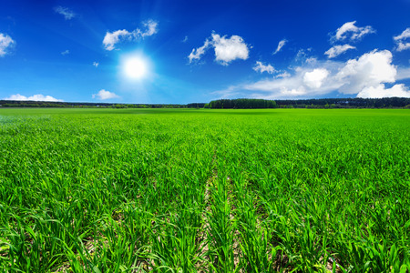 grassplot: Green field and blue sky