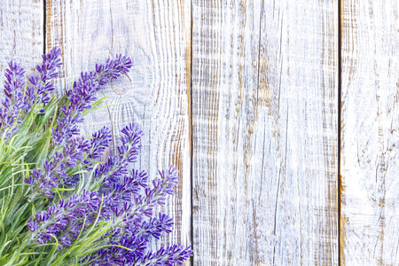 lavender flowers: lavender Stock Photo