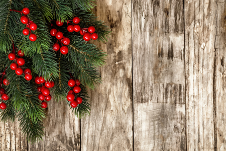 pine trees: christmas background