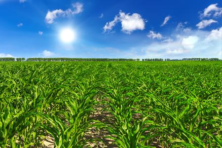 champ vert avec le ciel bleu