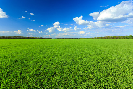 grassplot: green field with blue sky