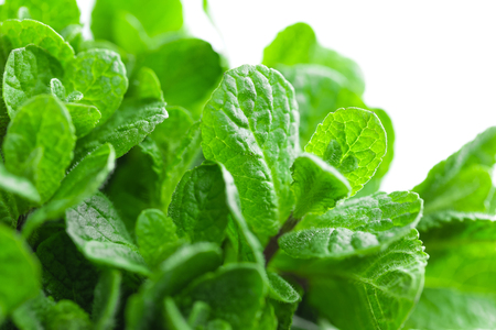 Fresh mint on white background closeup