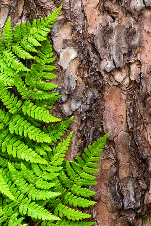 bark background: Green fern leaves background on bark tree, top view