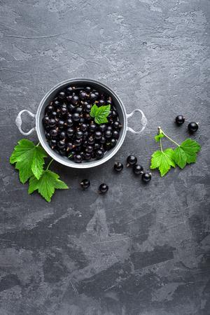잎이 검은 까치밥 나무 열매, 검은 건포도 스톡 콘텐츠