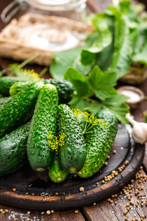 marinated gherkins: Canning cucumbers Stock Photo