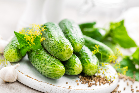 marinated gherkins: Fresh cucumbers and ingredients for conservation. Preparation marinated salted cucumbers with herbs and salt.