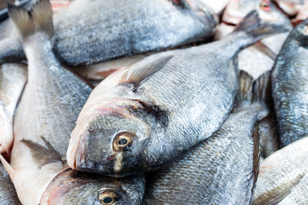 Fish. Fresh sea bream. Raw dorado fish Stock Photo