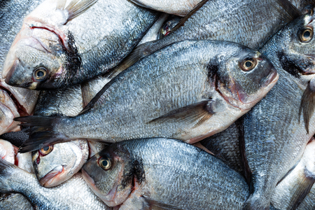 Fish. Fresh sea bream. Raw dorado fish Standard-Bild