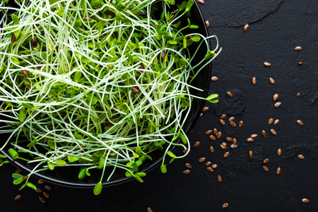 Healthy vegetarian bowl dish with fresh flaxseed sprouts. Plate with raw linseed sprouts salad. Healthy balanced eating. Superfood