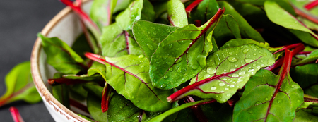 Fresh chard leaves on black background. Banner