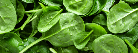 Fresh spinach leaves background. Healthy vegan food. Top view. Banner