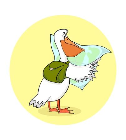 migratory: traveling pelican