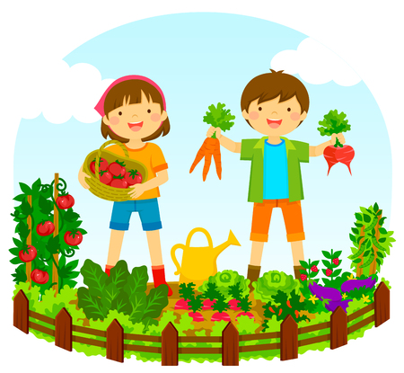 two kids picking vegetables in a vegetable garden Vettoriali