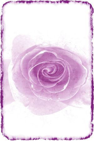 Purple rose in a retro style on a light background Stock Photo - 6229927