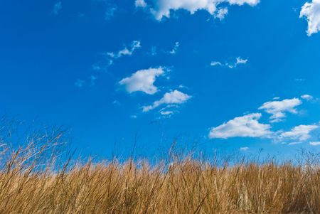 Field of a grass against the blue sky with white clouds Stock Photo - 6265865