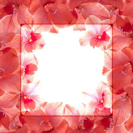 Beautiful background in the form of a framework from red flowers photo