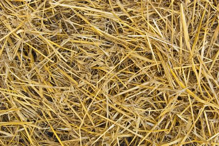 straw: Natural background from dry straw and hay