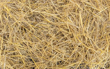 Natural background from dry straw and hay photo