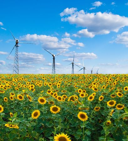 Field of sunflowers and wind power station on a background Stock Photo - 6411687