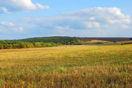 Beautiful autumn landscape with an oblique field of wheat Stock Photo - 6413928