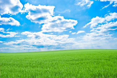 Field of a young green grass and blue sky with clouds photo