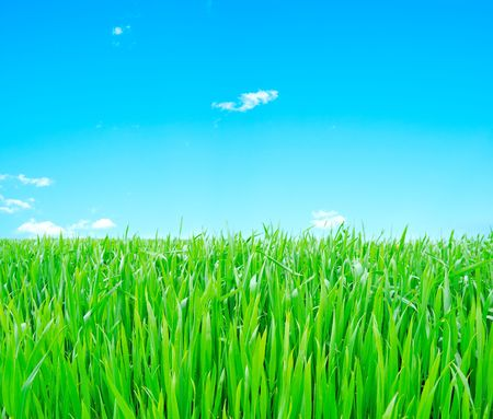 Meadow with a young green grass and the blue sky with clouds Stock Photo - 6568138