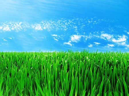 Meadow with a young green grass and the blue sky with clouds Stock Photo - 6606851
