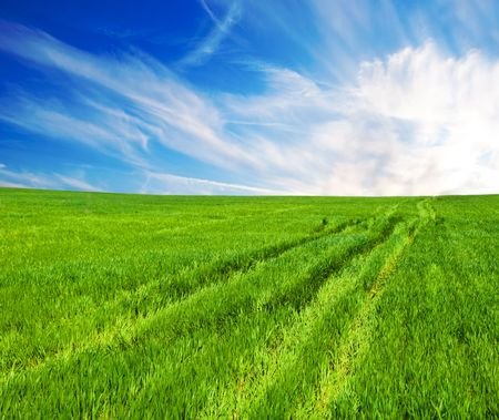 Meadow with a green grass and the blue sky with clouds Stock Photo - 6901414