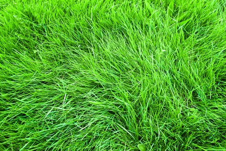 Background in the form of a young green grass Stock Photo - 6956429