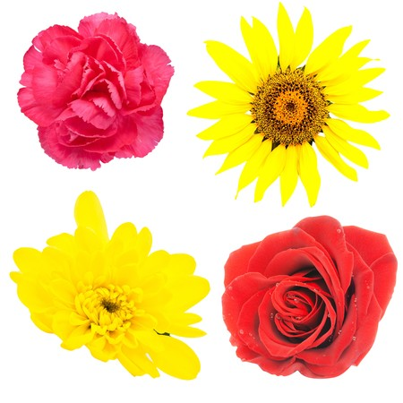 Set of flowers isolated on the white Imagens