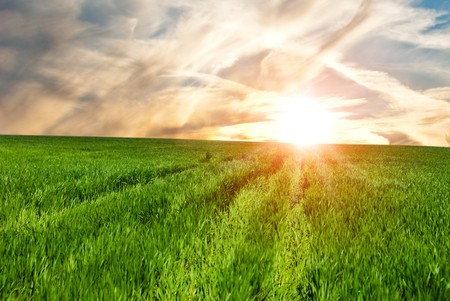 Field of a young green grass against a decline Stock Photo - 6956444