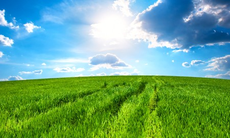 Meadow with a green grass and the blue sky with clouds Stock Photo - 6956443