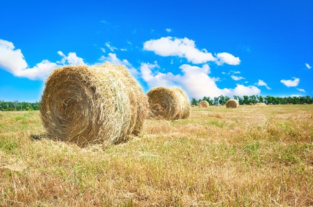Big hay bale field in late summer photo