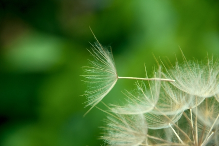 disperse: Dandelion close up against the nature Stock Photo