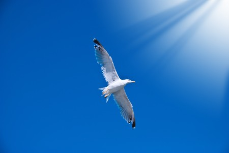 White seagull among the clear dark blue sky photo