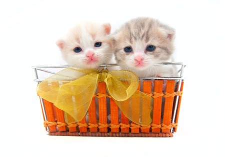 Two small kittens in a basket photo