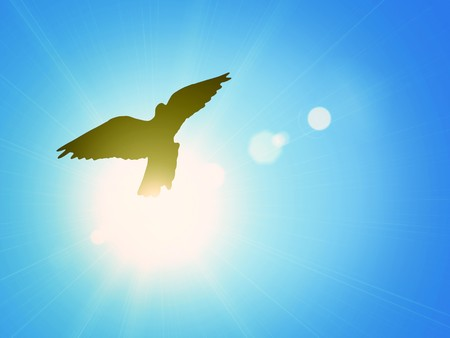 Pigeon against the blue sky and a shining sun photo