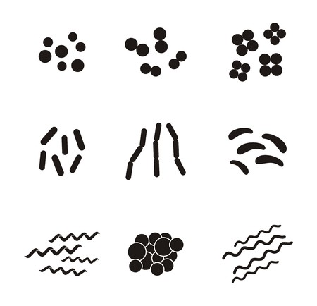 spirilla: shapes of bacteria - pictogram