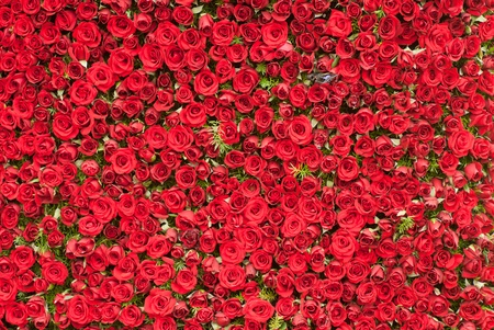 A wall of red roses background