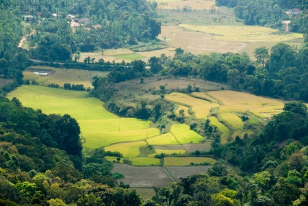 A valley in the Coorg (India) mountains