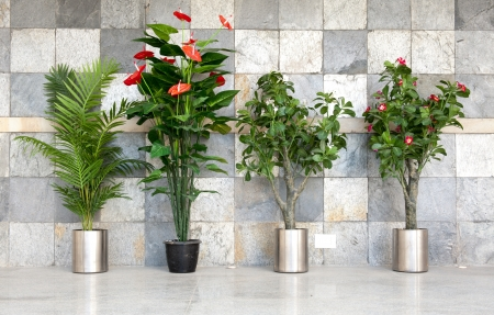 Four potted plants against stone wall Stock Photo