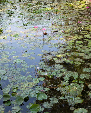 A lotus pond with the sky reflected in the water Stok Fotoğraf - 121083956