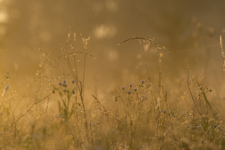 grass field in the rays of the rising sun photo