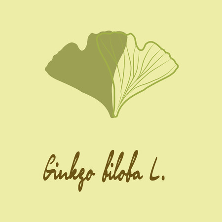 Ginkgo biloba stylizes leaves.  Silhouette of ginkgo leaves