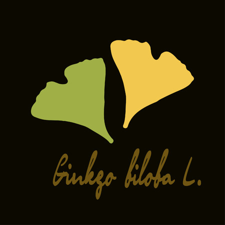 Ginkgo biloba stylizes leaves.  Silhouette of ginkgo leaves Vector
