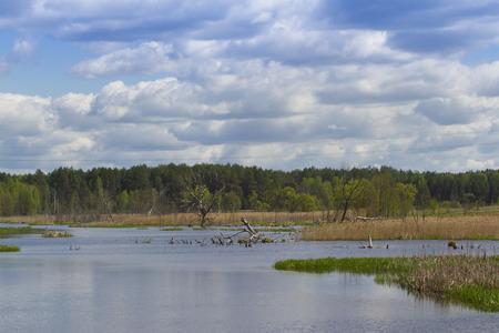 marshy: Wonderful landscape in marshy woodland in northern Ukraine.