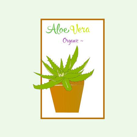aloe vera plant: Aloe vera plant in brown pot. Illustration aloe plant.